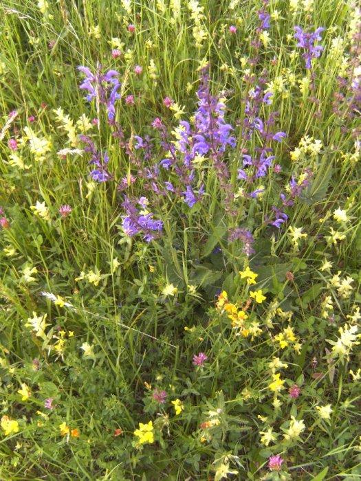 Vortrag zur bienenfreundlichen Gartengestaltung in Frastanz