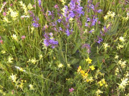 Blumenwiese - Foto: Gerlinde Wiederin